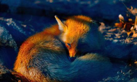 Pourquoi les images ne s'affichent pas dans Firefox ?
